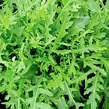 Семена рукколы Грация, 1 млн семян, фото 4