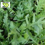 Семена рукколы Летиция, 100 000 семян, фото 2
