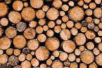 Сухие дрова дуб акация