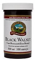 Грецкий орех, черный, 100 капсул по 500 мг, Black Walnut, NSP, США, фото 1