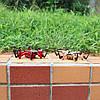 Карманный нано гексакоптер Jjrc H20 красный, фото 7