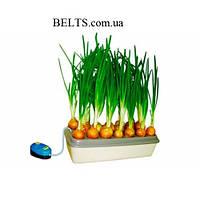 Наслаждайтесь зеленым свежим луком круглогодично - домашняя грядка Луковое счастье