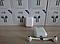 Беспроводные наушники i12 отличная замена AirPods, фото 4