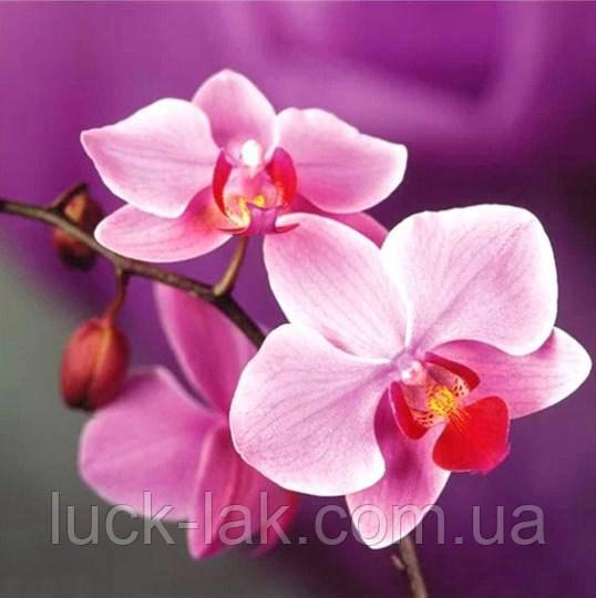 Алмазная вышивка орхидея 25х25 см, полная выкладка, квадратные стразы