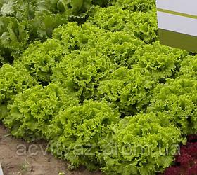 Семена салата Фанли F1, 5000 семян