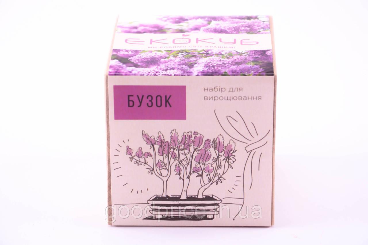 Набор для выращивания декоративных растений Экокуб Сирень