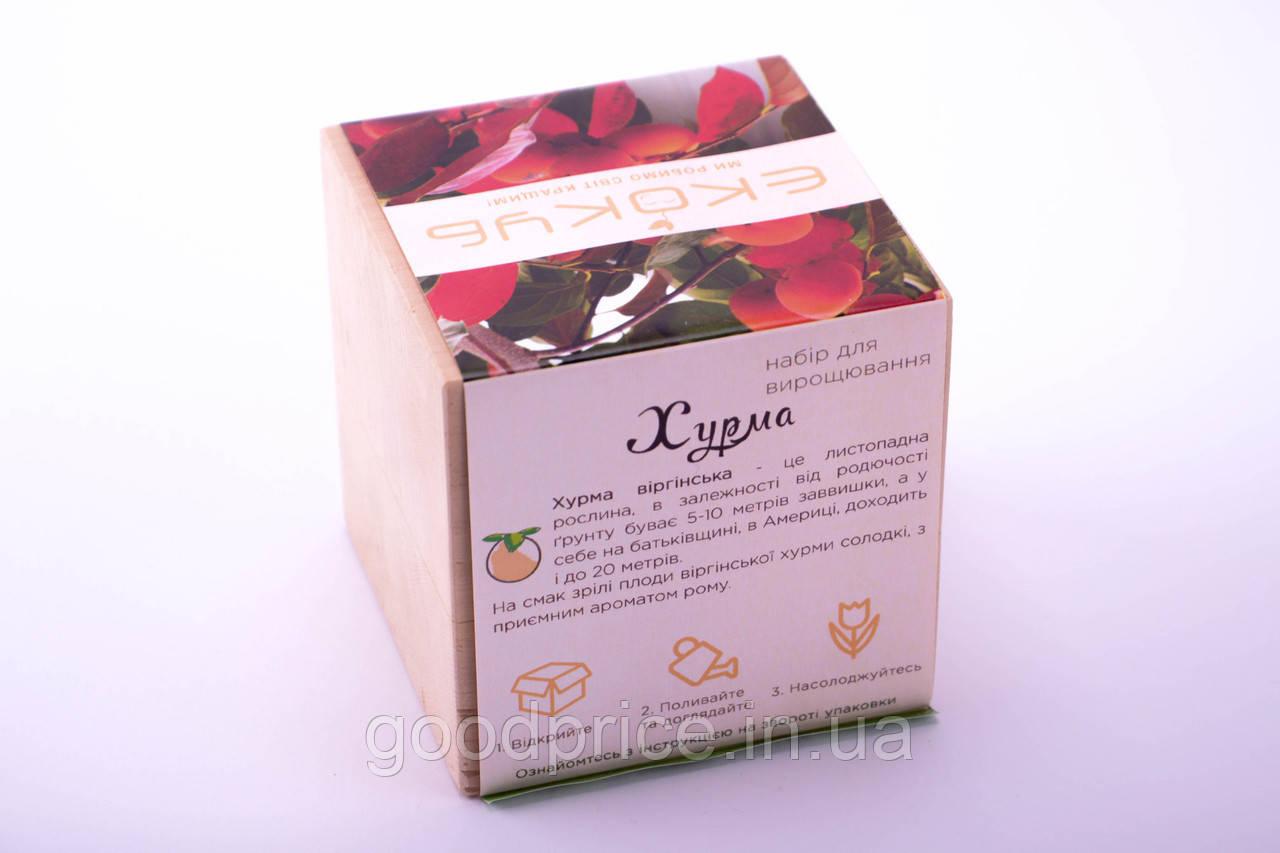 Набор для выращивания декоративных растений Экокуб Хурма