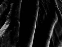 Шиншилла (черный) (арт. 0745) отрез 0,59 м