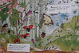 Книга Что делают муравьи, фото 2