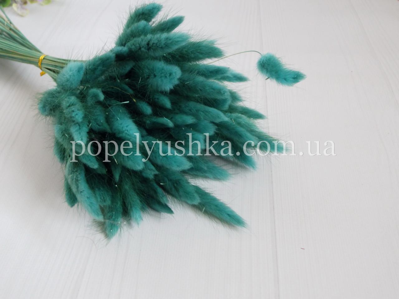 Лагурус натуральний бірюзово-зелений