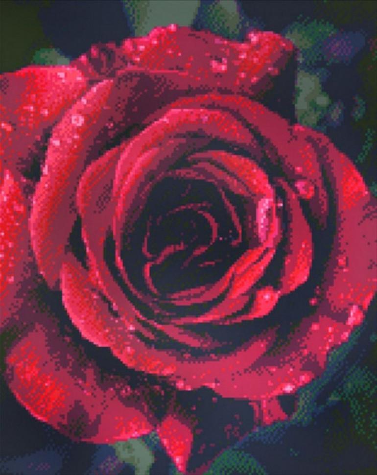Алмазная мозаика  Роза с каплями росы  40*50см