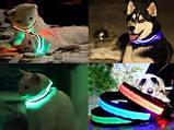 Ошейник LED светящийся узкий для небольших собак и кошек 0.5 м ave, фото 8