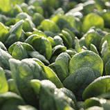 Семена шпината Тукан F1, 1 000 000 семян, фото 2