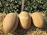 Семена дыни Мабелла F1, 1000 семян, фото 3
