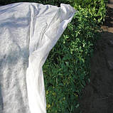 Агроволокно плотность 23, фото 2