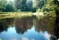 Биопрепарат для очистки водоема ПОНД ТРИТ 50 г ТМ MICROZYME (США)