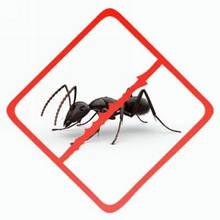 Засоби від тарганів і мурашок