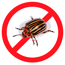 Засоби для боротьби з жуками