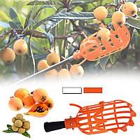 Инструмент Supretto для сбора ягод и фруктов (плодосниматель). Ручной садовый инструмент
