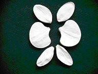 """Набор вайнеров """"Орхидея фаленопсис""""6х4(код 01587)"""