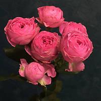 Роза Жизель (Giselle) Спрей