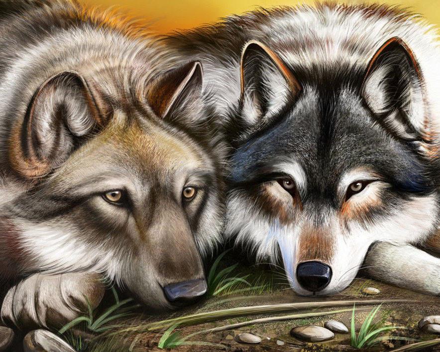 Алмазная мозаика Волки 50x40см DM-102 Полная зашивка. Набор алмазной вышивки