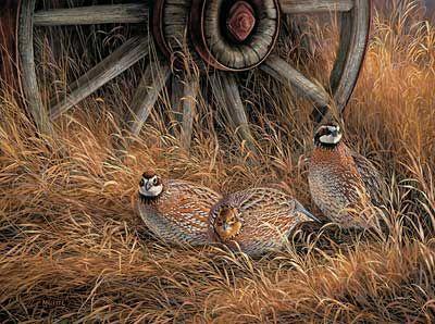 Алмазная мозаика Куропатки в траве 40x30см DM-172 Полная зашивка. Набор алмазной вышивки