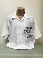 Шведка тенниска рубашка с коротким рукавом мужская белая лен  Fill Pucci РАЗМЕР+, фото 1