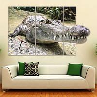 Серые Фигурные Часы картина модульная Крокодил 30x55 30x55 30x55 см