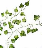 Лиана плющ  зеленый 200см, фото 3
