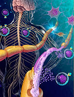 Рассеянный склероз - приговор? Диагностика и лечение рассеянного склероза
