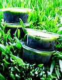 Сок ростков ячменя (90 порций), фото 4
