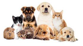 Средства по уходу за домашними животными