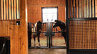 Технологічні секції групового утримування коней, фото 1