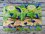 Развивающая Большая книга с наклейками Птицы 98952+ БАО Украина, фото 2
