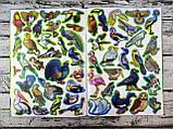 Развивающая Большая книга с наклейками Птицы 98952+ БАО Украина, фото 3