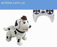 Собака 888-1F