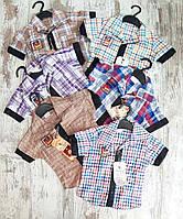 Детская рубашка для мальчика в клеточку 1-4 года, цвет уточняйте при заказе