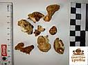 ГЕРИЦИУМ ГРЕБЕНЧАТЫЙ сушеный (Ежовик) Hericium erinaceus, фото 3