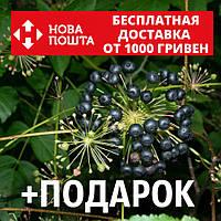Аралия маньчжурская семена (20 шт) для выращивания саженцев Aralia mandshúrica насіння на саджанці +подарок, фото 1
