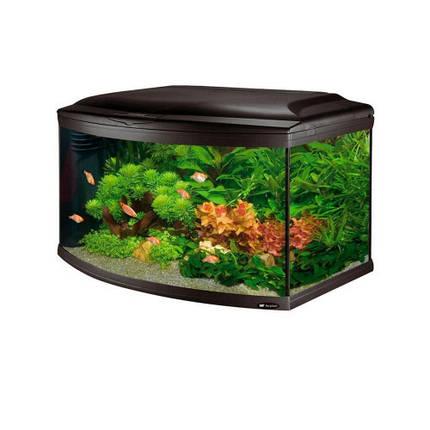 Аквариум с закругленным стеклом Ferplast Cayman 80 Scenic Black T5 с, внутренним фильтром и таймером, 150 л, фото 2