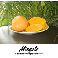 Свежий фрукт Манго