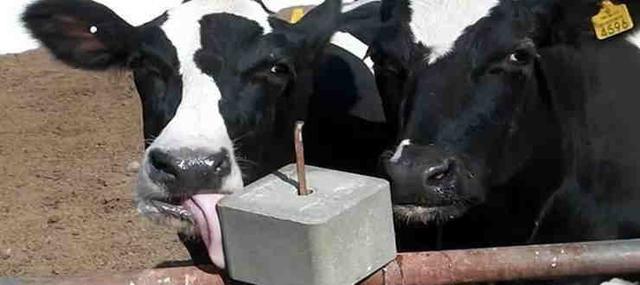 Солькормова брикетированная (пресованная, лизунец) для коров и КРС