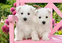 "Пазлы Castorland 1500 ""Два белых щенка"" (176446)"