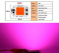Світлодіодна LED фіто матриця COB 30 Вт 220v Для росту рослин, повний спектр світла