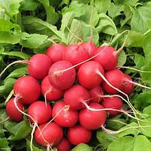 Семена редиса Рондар F1 (10 000 сем.) Syngenta
