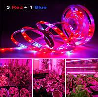 1м Світлодіодна фіто стрічка 60smd 5050 3+1 12v IP65 Для росту рослин, повний спектр світла