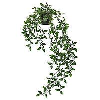 IKEA Искусственное растение в горшке, д/дома/улицы, подвесной, 9 см
