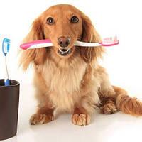 Средства по уходу и гигиене для собак