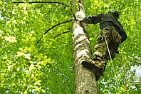 Обрезка деревьев, удаление деревьев.